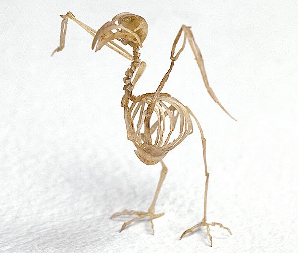 "Tim Hawkinson, ""Bird"" (1997), made of fingernails and super glue,"